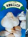 ジャンボにんにく 種 500g(鱗片約16コ)種はバラした状態です。大人の握りこぶし位になる大きさ 臭い味はマイルドでとても食べやすい …