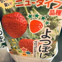 イチゴ苗 よつぼし 9センチポット 1苗 甘味・酸味・風味がよつぼし級 ※イチゴ苗・その他の野菜苗取り合わせ可10苗まで同一送料 いち…