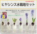ヒヤシンス水栽培セット ガラス容器+ヒヤシンス球根1球 球根は色をお選び頂けます。秋植え 球根栽培 インドア 室内 園芸 観葉植物 栽…