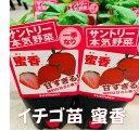 イチゴ苗 蜜香 9センチポット 1苗 ※イチゴ苗・その他の野菜苗と合わせて10苗まで同一送料 みつか サントリーフラワーズ本気野菜イチゴ…