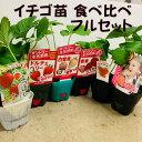 イチゴ苗 食べ比べフルセット 6品種各1苗 9センチポット  四季成・一季成・白イチゴ 家庭菜園向き品種を揃えました 秋植え野菜苗 5〜6…