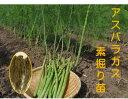 アスパラガス 1年生苗 根株 10株セット 品種名グリーンタワー 茨城県産 翌々年の春から収穫を 一度植えれば10年間ほど収穫ができると…
