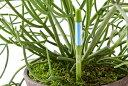 サスティー Mサイズ 1本 シングルパック カラ- グリーン・ホワイト 植物の水分チェッカー 水分計 3.5, 4, 5, 6号鉢 直径 10.5〜18cmく…