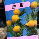 金柑苗 根巻 接木 11〜2月頃収穫 植え付けから2〜3年してから収穫が目安 素掘り苗