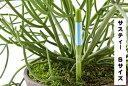 サスティー Sサイズ 1本 シングルパック カラ- グリーン・ホワイト 植物の水分チェッカー 水分計2〜3号鉢 直径 6〜9センチくらいの鉢用…