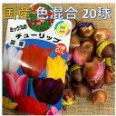 チューリップ球根 送料無料 20球 色 混合 国産 プランター栽培 地植え可能 育てやすい花 10~1月植え 3~4月開花