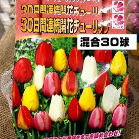 チューリップ球根 送料無料 30球混合30日連続開花 8種類のチューリップ球根が1か月間続けて開花 10~1月植え付け 3~4月開花