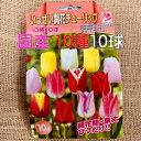 チューリップ球根 送料無料 10球 色 混合 国産 プランター栽培 地植え可能 育てやすい花 10~1月植え 3~4月開花 テープ巻球で色区別が…