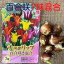 チューリップ球根 送料無料 7球 百合咲 色 混合 国産 プランター栽培 地植え可能 育てやすい花 10~1月植え 3~4月開花