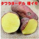 じゃがいも種芋 タワラヨーデル 1キロ 約12コ 青森県産種芋馬鈴薯 検査合格済
