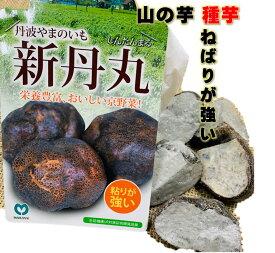 山の芋(つくね芋) 種芋 新丹丸 種芋5片入(切芋)粘りは格別 とろろ芋・揚げ物などに 4〜5月植え 10〜11月収穫