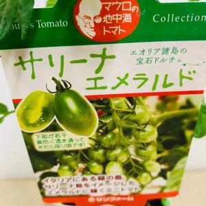 緑色 ミニトマト苗 サリーナエメラルド 甘い 実生苗9センチポット苗