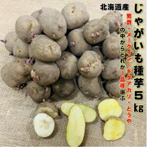 1月30日まで121円OFF じゃがいも 種芋 5kg 約40〜50コ 男爵・メークイン・キタアカリ・とうやの中から1品種のみ選んでください。 M,Lサイズ 芋が2つ〜3つ切できる大きさです。 北海道産 馬鈴