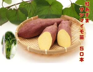 サツマイモ苗 紅あずま 50本 早生ホクホク甘みが強い 植付けから約120〜140日後収穫 関東地方代表種 定番種 紅あづま 紅東