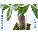 水枯れ予防にサスティー Lサイズ 1本 グリーン ホワイト 6〜12号鉢 直径 18〜36センチくらいの鉢用 運ぶのに力が要るくらいの鉢用 観葉…