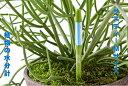 水枯れ予防にサスティー Mサイズ 1本 グリーン ホワイト 5〜6号鉢用 直径18センチぐらいまでの鉢用 観葉植物 鉢物観葉植物コチョウラン…
