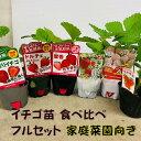 イチゴ苗 食べ比べフルセット 6品種各1苗 9センチポット  四季成・一季成・白イチゴ 家庭菜園向き品種を揃えました …