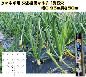 タマネギ用穴あき黒ポリマルチ 幅0.95m×長さ50m 厚み0.02 株間15 1mでタマネギ苗が約30本植えられます 予め穴が開いているから植えやすい! 玉ねぎ苗 にんにく ニンジン ホウレンソウ カ