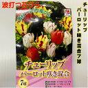 値引 チューリップ球根 送料無料 7球パーロット咲 色 波打つような花びら 混合 富山県・オランダ プランター栽培 地植…