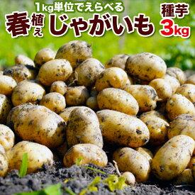 1月30日まで120円OFF じゃがいも 種芋 3kg 男爵 キタアカリ メークイン とうや 合計3キロになるように選択 北海道産検査合格済馬鈴薯種 タネイモ M、Lサイズ
