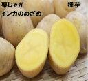 ※ 3月上中旬頃〜発送予定インカのめざめ 種芋1キロ 約12〜18コ 北海道or青森県産種馬鈴薯検査合格済 栗じゃか いも…