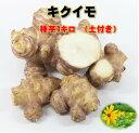 キクイモ 種芋 1キロ 土付き 植え付け約23〜30株分 煮物・サラダ・炒め物などに 菊芋 健康野菜球根