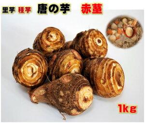 種サイズ細かめ 里芋 種芋 唐の芋 赤茎 1キロ 親芋・子芋・赤い茎も食べられる 唐の芋 サイズ2S〜M 薬10〜20コ