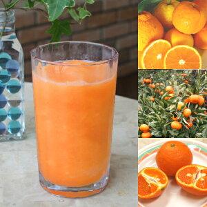 【冷凍便】和歌山産「オレンジMIXスムージー」農家さんから直接分けてもらう柑橘類(みかん・清見・バレンシア等 + レモン)+みかんの花の蜂蜜のフローズンフルーツジュース・冷凍果物