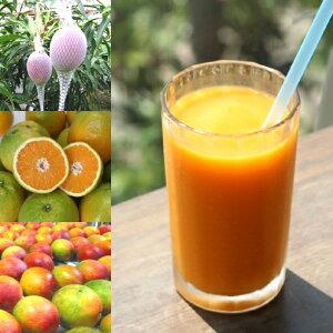 【冷凍便】和歌山産「トロピカルスムージー」農家さんから直接分けてもらうくだもの(和歌山産完熟マンゴー+夏のオレンジ)+バナナのフローズンフルーツジュース・冷凍果物