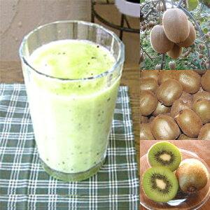 【冷凍便】和歌山産「キウイフルーツスムージー」農家さんから直接分けてもらうくだもの(キウイフルーツ+レモン+みかんの花の蜂蜜)のフローズンフルーツジュース・冷凍果物