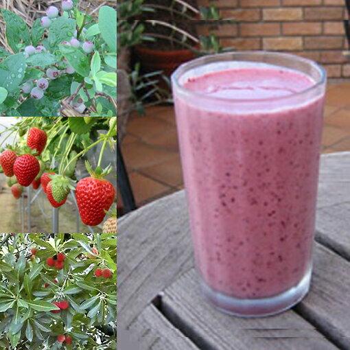 和歌山産「ベリー・ベリースムージー」農家さんから直接分けてもらうくだもの(いちご+ブルーベリー+ヤマモモ+オレンジ+みかんの花の蜂蜜)のフローズンフルーツジュース・冷凍果物
