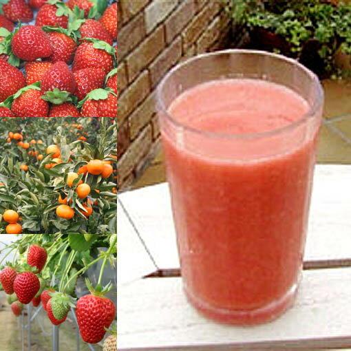 和歌山産「イチゴ&オレンジスムージー」農家さんから直接分けてもらうくだもの(いちご+オレンジ+みかんの花の蜂蜜)のフローズンフルーツジュース・冷凍果物