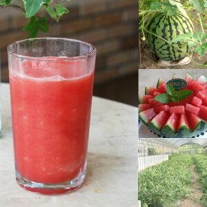 【冷凍便】和歌山産「スイカスムージー」農家さんから直接分けてもらう印南町産西瓜(小玉すいか「ひとりじめ7」)のフローズンフルーツジュース・冷凍果物