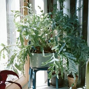 Artek(アルテック)リーヒティエプラントポット(S)オシャレな北欧インテリア雑貨花瓶植木鉢フィンランド北欧を代表するアルヴァアアルトのデザインガーデニング植物リヒーティエプラントタイプA/B選べるデザインインテリアにもなる