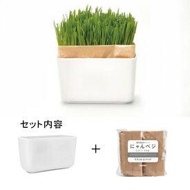 ハリオ 猫草栽培キット にゃんベジセット PTS-NKCN-2P 【リニューアル】