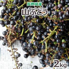 2020年 近日出荷ただいま、採れています!長野県の山の「山ぶどう(野生)」2kg★北海道・中国・四国・九州・沖縄離島は送料別途