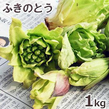 フキノトウ1kg予約販売【3月中旬前〜発送予定】天然山菜・ふきのとうまとめて1kg(大小バラ詰め)※送料別(クール便)