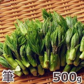 筆500g予約販売天然・筆コシアブラ500g(大小バラ詰め)※送料別(クール便)