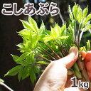 予約販売天然・コシアブラ(10cm以下) まとめて1kg(大小バラ詰め)【5月中旬〜発送予定】※送料別(クール便)