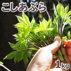 コシアブラ1kg予約販売天然・コシアブラ(10cm以下) まとめて1kg(大小バラ詰め)※送料別(クール便)