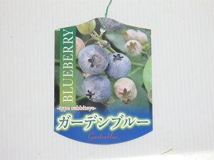 ブルーベリー ラビットアイ系 ガーデンブルー 12cm鉢