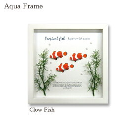 Aqua Frame Clow Fish 熱帯魚 カクレクマノミ 水槽風 インテリア 北欧 かわいい 壁掛け 立体 個性的 ユニーク インパクト 天然木 壁面 パネル フェイク 壁掛け デザイン 雑貨 カフェ プレゼント ギフト リビング ダイニング 誕生日 引越し祝い 新築祝い