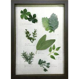 アートパネル インテリア アートフラワー 壁掛け ハーブ ギフト おしゃれ 玄関 リビング ウォールアート 木製 グリーン 植物 造花 かわいい カラフル プレゼント