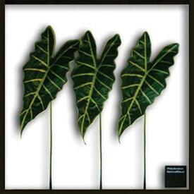 壁掛け グリーン リーフ アートパネル リーフパネル リーフアート グリーンパネル ウォールデコ 正方形 アート アートフレーム 壁面装飾 造花 観葉植物 ギフト 壁 ウォールディスプレイ 北欧 モダン トイレ リビング インテリア カフェ IFF11192 Alocasia Amazonica