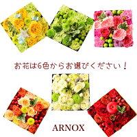 ARNOX「アルノックス」