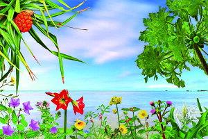 ポストカード5枚で【送料無料】PSC-204 波照間島 ベー浜と花と植物 美しい風景写真のポストカードや絵はがきはいかがですか? クリスマスカード残暑見舞い年賀状 グリーティングカード 礼