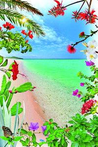 ポストカード5枚で【送料無料】PSC-205 波照間島 ニシ浜と花と植物 美しい風景写真のポストカードや絵はがきはいかがですか? クリスマスカード残暑見舞い年賀状 グリーティングカード 礼