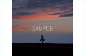 風景写真ポスター 北海道美瑛 夕暮れと一本の木 海の景色 夜明けの海 キャンバス 絵画 ART アートフレーム 夕日 壁の絵 海の景色 壁掛け 背景 osp-319