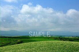 風景写真ポスター 北海道美瑛 自然を満喫する北の大地 osp-377