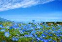 ポストカード ネモフィラ 花の風景写真 どれでも5枚以上で【送料無料】空と海の青とネモフィラ 茨城 ひたち海浜公園 …